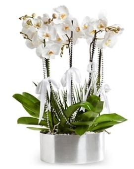 Beş dallı metal saksıda beyaz orkide  Kırşehir İnternetten çiçek siparişi