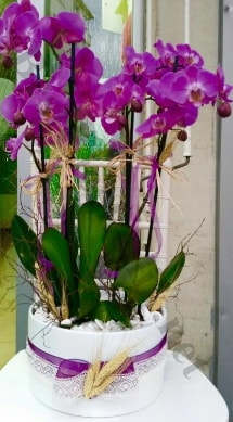 Seramik vazoda 4 dallı mor lila orkide  Kırşehir internetten çiçek siparişi
