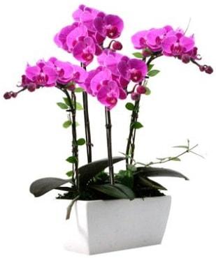 Seramik vazo içerisinde 4 dallı mor orkide  Kırşehir çiçek gönderme