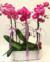 Beyaz seramik içerisinde 4 dallı orkide  Kırşehir çiçek satışı