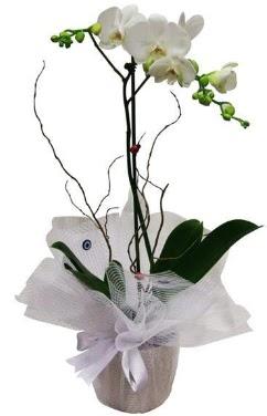 Tek dallı beyaz orkide  Kırşehir çiçek siparişi vermek