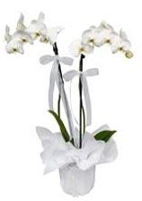 2 dallı beyaz orkide  Kırşehir çiçek mağazası , çiçekçi adresleri