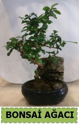 Bonsai ağacı japon ağacı satışı  Kırşehir çiçek , çiçekçi , çiçekçilik
