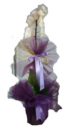 Tek dallı beyaz orkide süper kalite ithal  Kırşehir hediye çiçek yolla
