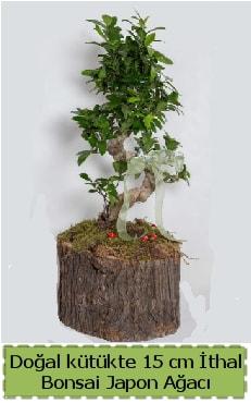 Doğal kütükte İthal bonsai japon ağacı  Kırşehir çiçek gönderme sitemiz güvenlidir