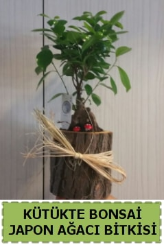 Kütük içerisinde doğal bonsai ağacı  Kırşehir çiçek yolla