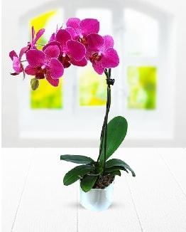 Tek dallı mor orkide  Kırşehir çiçek gönderme