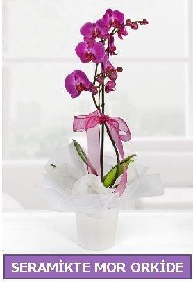 Seramik içerisinde birinci kalite tek dallı mor orkide  Kırşehir online çiçekçi , çiçek siparişi