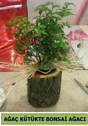 Doğal ağaç kütük içerisinde bonsai ağacı  Kırşehir çiçek yolla , çiçek gönder , çiçekçi