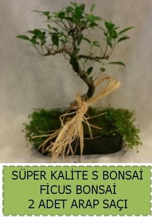 Ficus S Bonsai ve arap saçı  Kırşehir çiçek yolla