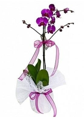 Tekli Mor Orkide  Kırşehir İnternetten çiçek siparişi
