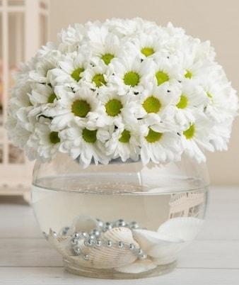 Fanusta beyaz Papatya  Kırşehir çiçek gönderme