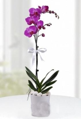 Tek dallı saksıda mor orkide çiçeği  Kırşehir çiçek siparişi sitesi