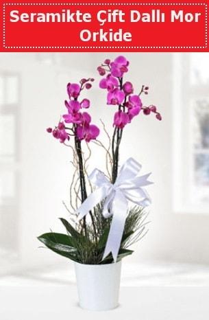 Seramikte Çift Dallı Mor Orkide  Kırşehir uluslararası çiçek gönderme